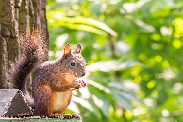 Écureuil assis sur une mangeoire