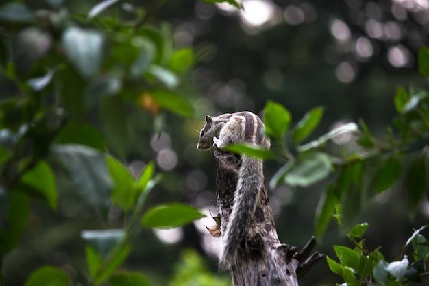 Un écureuil sur la branche d'arbre dans son habitat naturel