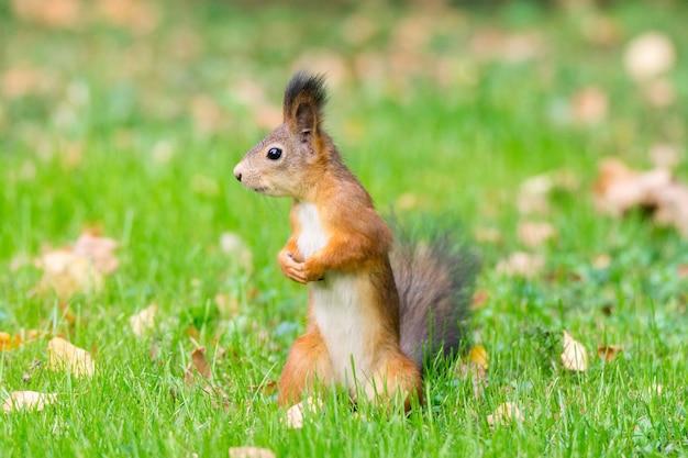 Écureuil sur une branche