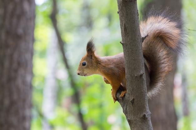 Écureuil sur branche