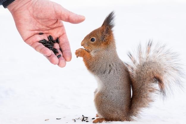 Écureuil cherche la noix