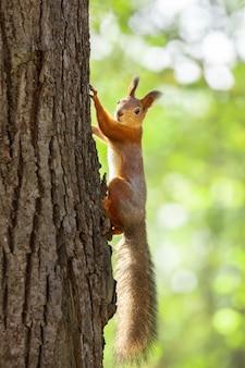 Écureuil dans le parc en automne