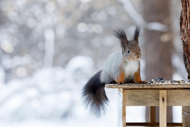 Écureuil gris sur arbre à winter park