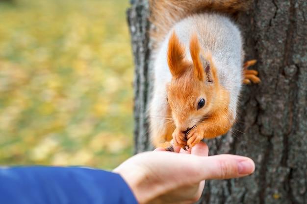L'écureuil mange du bois dans la forêt.