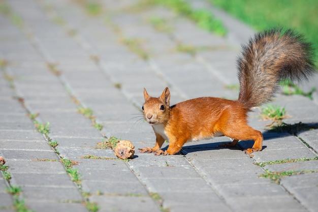Un écureuil avec une noix