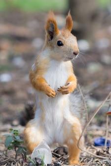 Écureuil en quête d'aventure