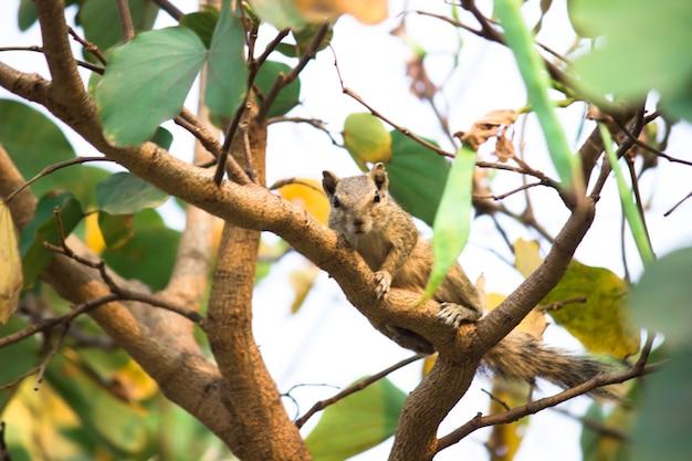 Écureuil ou rongeur ou également connu sous le nom de tamia assis sur le tronc de l'arbre