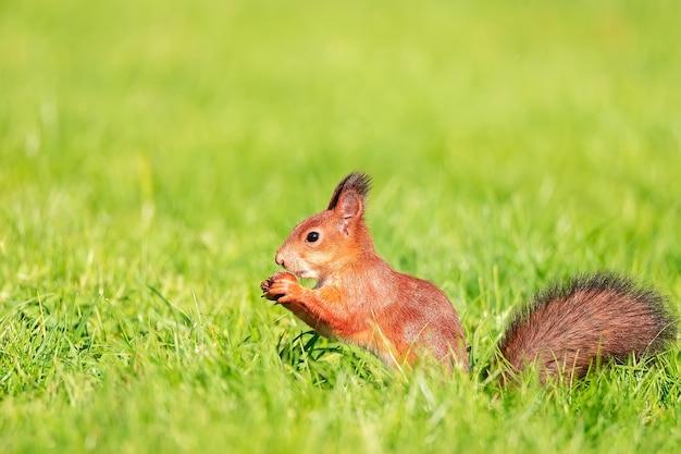 Écureuil se promène dans le parc d'automne