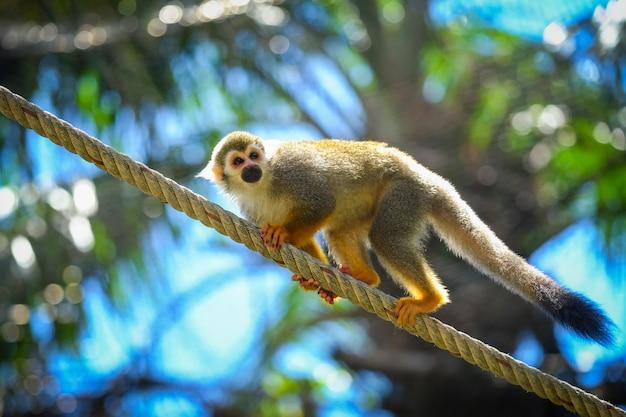 Écureuil, singe, sur, branche, arbre, animaux, dans, désert