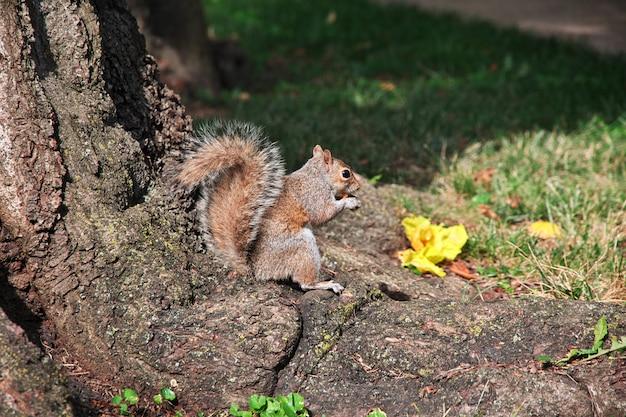 L'écureuil à washington, états-unis
