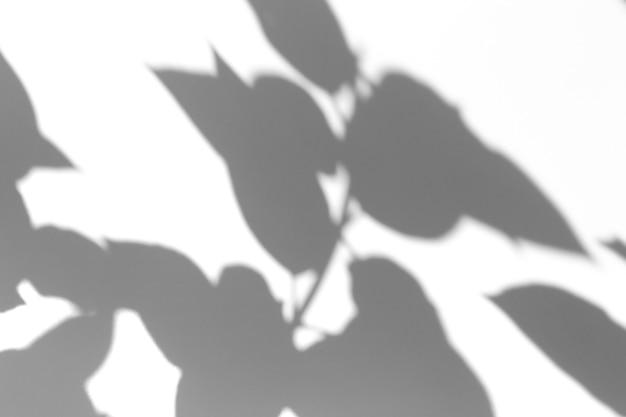 Effet de superposition d'ombre. les ombres des feuilles des arbres et des branches tropicales sur un mur blanc au soleil.