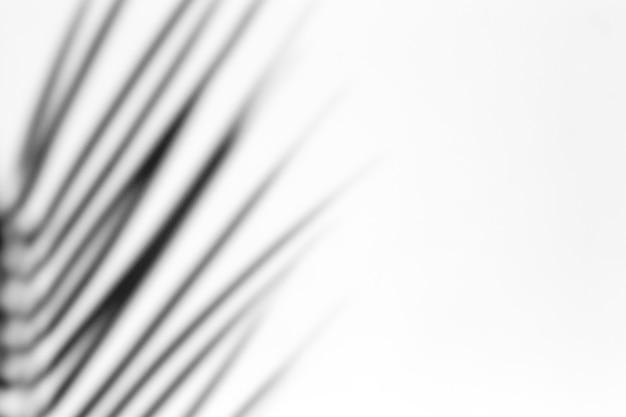 Effet de superposition d'ombre pour la photo. les ombres des feuilles de palmier et des branches tropicales sur un mur blanc au soleil.