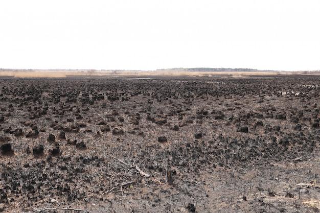 Effets du feu d'herbe sur les sols. herbe carbonisée après un incendie de printemps. surface noire du champ rural avec une herbe brûlée. conséquences de l'incendie criminel et du brûlage du chaume. conséquences des catastrophes naturelles.