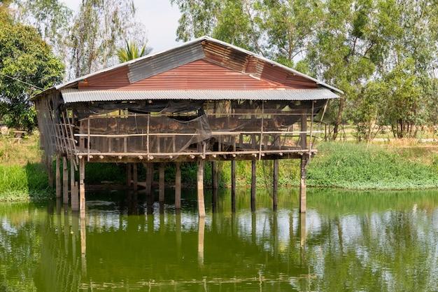 Eggs poulets farm, poules en cages ferme industrielle. élevage de poules pondeuses dans des étangs à poissons.