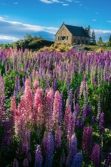 Église du bon pasteur et du champ de lupin, lac tekapo