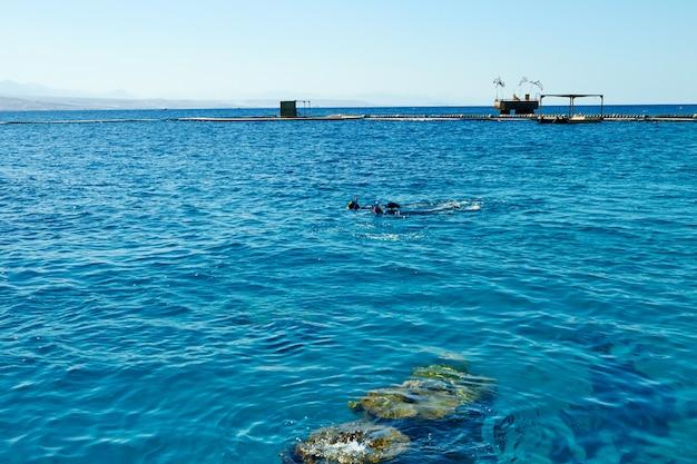 Eilat-israel 8 septembre 2018. récif de dauphins sur la mer rouge.