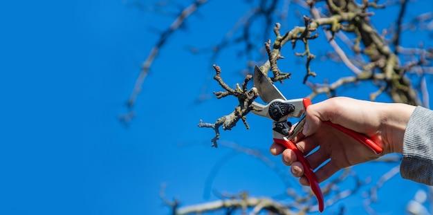 Élagage des branches avec un sécateur.