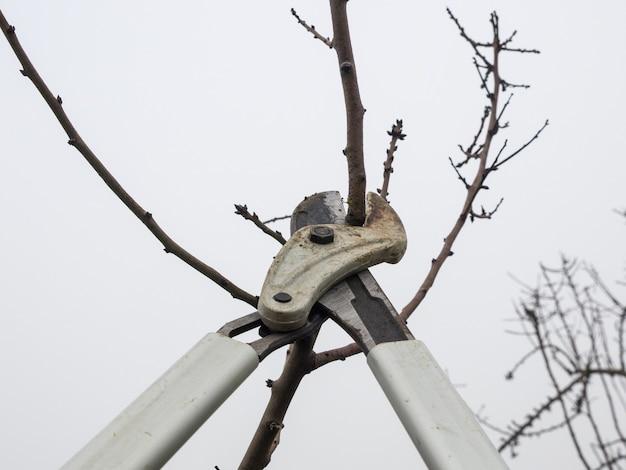 L'élagage d'un jeune sécateur d'arbre dans un champ à l'automne par temps nuageux.