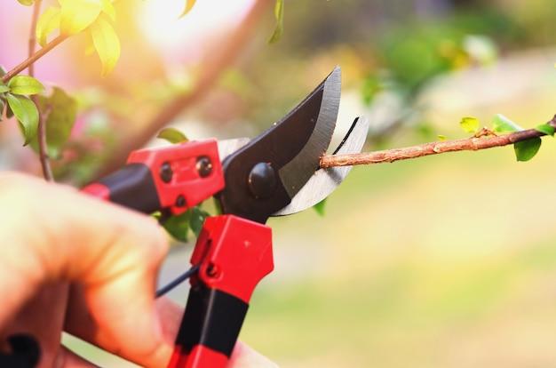 Élagage à la main et cisaillement dans le jardin avec fond de coucher de soleil