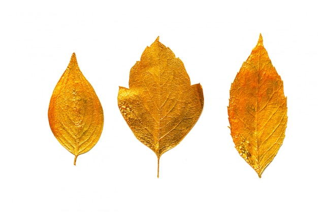 Éléments de conception de feuille d'or.