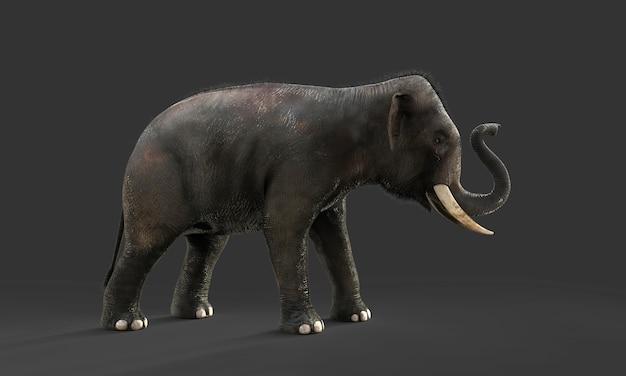 Éléphant 3d isolé sur fond noir