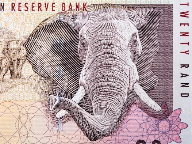 Éléphant d'afrique un portrait de l'argent sud-africain