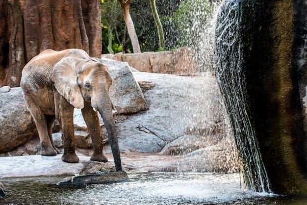Éléphant d'afrique se rafraîchissant dans une rivière et de l'eau potable.