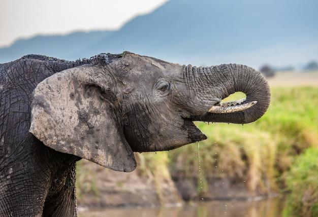 L'éléphant boit de l'eau dans la savane.