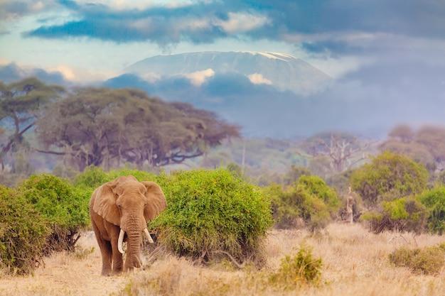 Éléphant contre la montagne du kilimandjaro