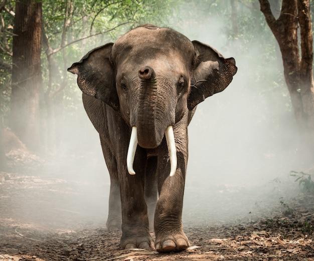 Éléphant avec cornac dans un village d'éléphants en thaïlande