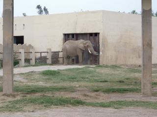 L'éléphant, le corps