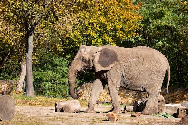 Éléphant dans une clairière