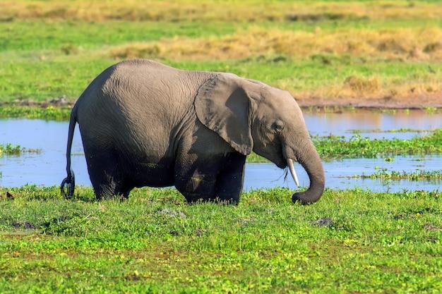 Éléphant dans l'eau