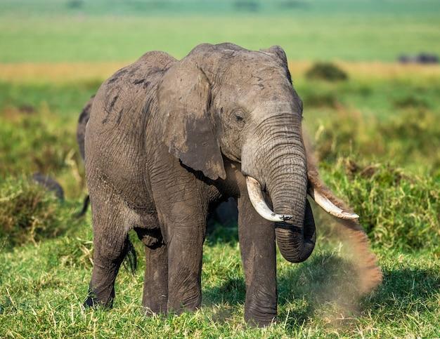 Éléphant dans la savane.