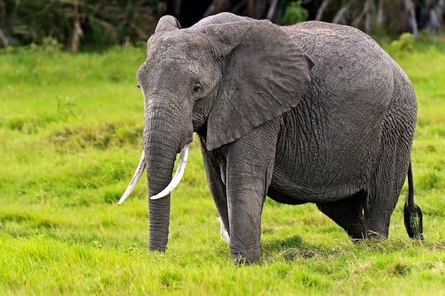Éléphant Dans Son Habitat Naturel Dans La Savane Africaine Photo Premium