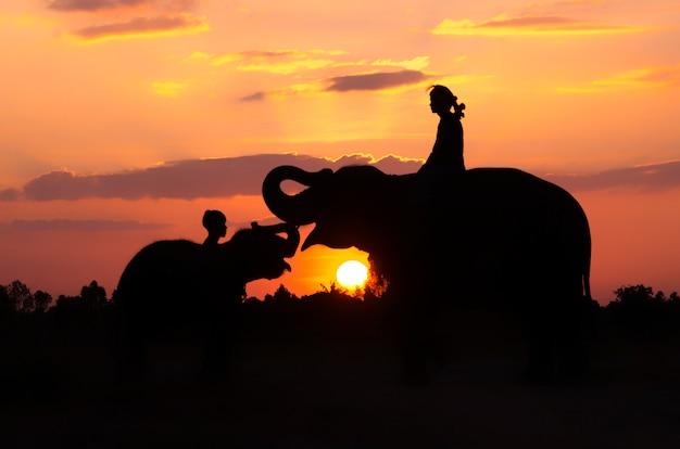 Un éléphant debout sur une rizière le matin. village des éléphants au nord-est de la thaïlande, belle relation entre l'homme et l'éléphant.
