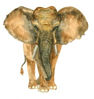 Éléphant dessiné à la main aquarelle
