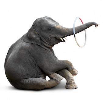 Éléphant jouant au hulahoop