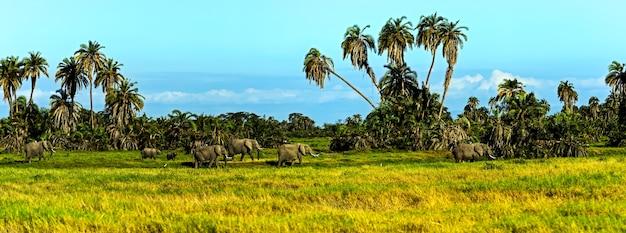 Éléphant avec le mont kilimandjaro