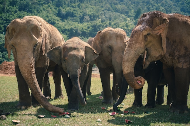 Éléphant de nature dans la forêt de thaïlande