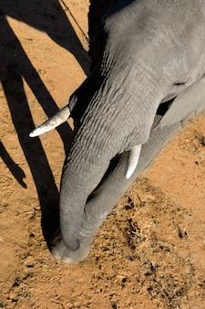 Éléphant sur la nature