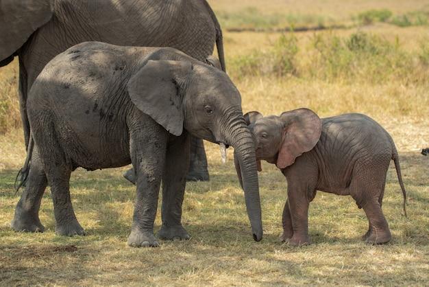 Éléphant rose mignon bébé