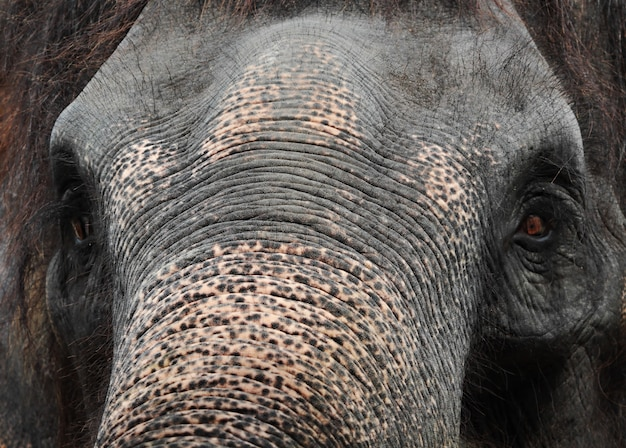 Éléphant se bouchent