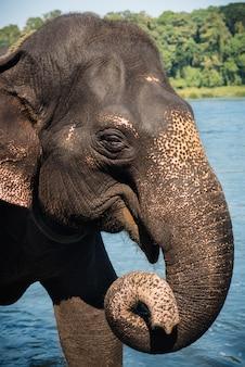 Éléphant se lavant dans la rivière