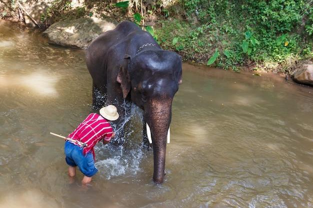 Éléphant thaïlandais était prendre un bain avec mahout dans le camp d'éléphants maesa, chiang mai, thaïlande