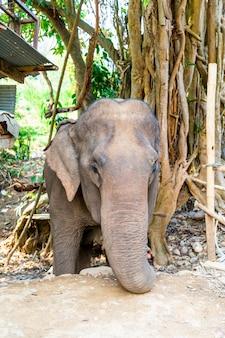 Éléphant en thaïlande