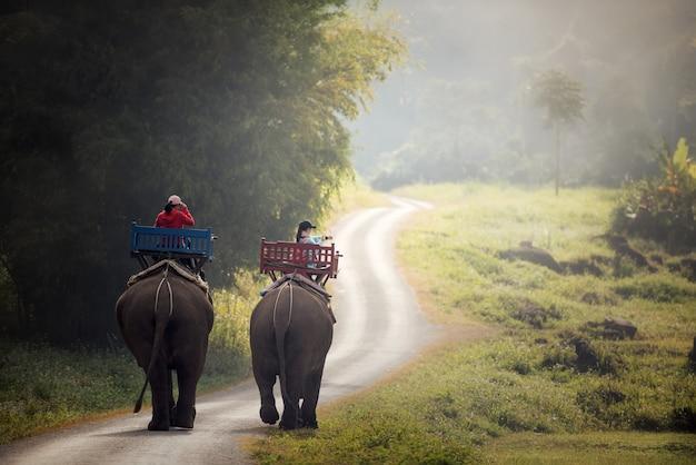Elephant trekking à travers la jungle dans le nord du laos