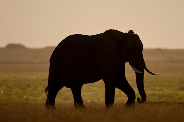 Éléphant vu rétro-éclairé