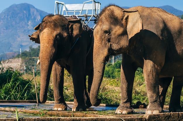 Éléphants au vietnam