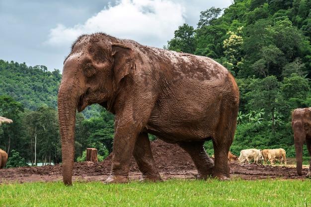 Éléphants à chiang mai. parc naturel d'éléphants, thaïlande